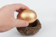 Sätta det guld- ägget i rede Arkivbild