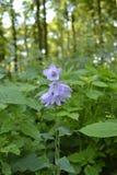 Sätta en klocka på blomman Fotografering för Bildbyråer