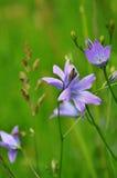 Sätta en klocka på blomman Arkivbilder