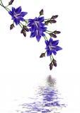 Sätta en klocka på blomman Royaltyfria Foton