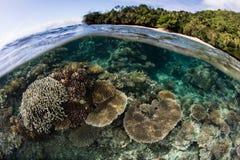 Sätta fransar på Coral Reef i Fiji Royaltyfri Bild