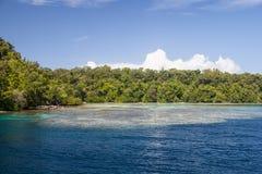 Sätta fransar på reven i Solomon Islands arkivbild