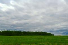 Sätta in grässkogen i bakgrunds- och stormmolnen Arkivbilder