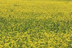 Sätta in med gula blommor Arkivbild
