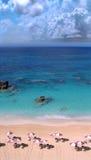 sätta på land bermuda Arkivbild