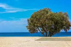 sätta på land den ensamma treen royaltyfri bild