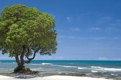 sätta på land den hawaii platsen Royaltyfri Bild
