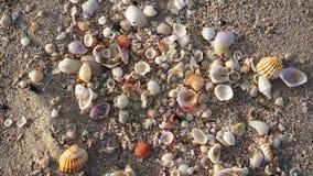 sätta på land det sandiga havsskalet lager videofilmer