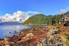 sätta på land driftwood Royaltyfria Bilder