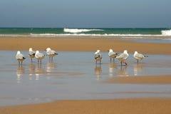sätta på land fåglar royaltyfri bild