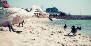 sätta på land fåglar Fotografering för Bildbyråer