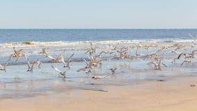 sätta på land fåglar Royaltyfria Bilder