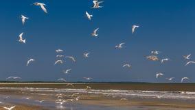 sätta på land fåglar Arkivfoto