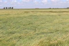 Sätta på land gräs och diket i den nordliga Tyskland, Europa Royaltyfri Foto