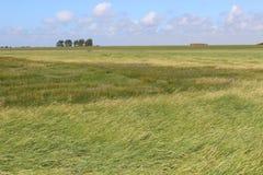 Sätta på land gräs och diket i den nordliga Tyskland, Europa Fotografering för Bildbyråer