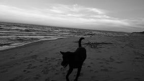 sätta på land hunden Royaltyfri Foto