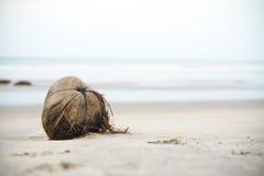 sätta på land kokosnöten royaltyfria bilder