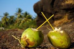 sätta på land kokosnöten Arkivfoto