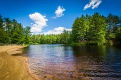 Sätta på land på en sjö på björnbäckdelstatsparken, New Hampshire royaltyfri bild