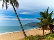 sätta på land palmträd Fotografering för Bildbyråer