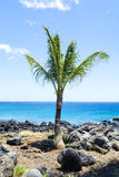 sätta på land palmträdet Arkivbild