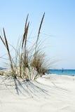 Sätta på land platsen med löst gräs på framdelen och havet i baksidan royaltyfri bild