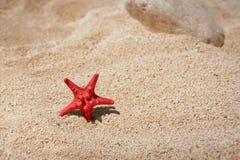 sätta på land sandsjöstjärnan Arkivbild