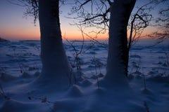 sätta på land snöig trees arkivfoton