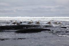 sätta på land stormiga seagulls Royaltyfri Bild