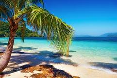 sätta på land tropiska thailand Royaltyfria Foton