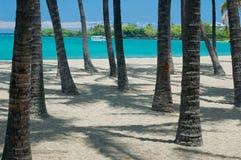sätta på land tropiskt Arkivbild