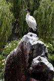 Sätta sig fågel Royaltyfri Foto