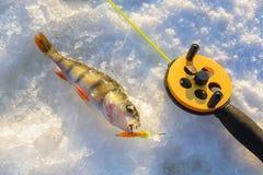 Sätta sig fisken med stången som ligger på isen, closeup lies för fiskeis bara blockerade vinterzander Arkivbilder