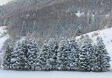 Sätter in av snow och snow täckte trees på dolomitesna i vinter Arkivfoto