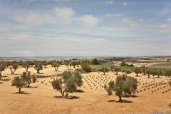 Sätter in i Spanien. Arkivbild
