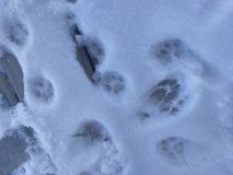 Sätze Katzenbahnen im Schnee auf dem Portal am 17. Januar 2018 genommen Lizenzfreie Stockfotografie