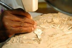 Säubern eines Fossils Stockfoto