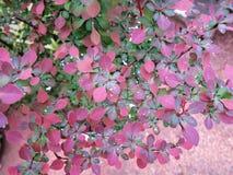 Säubern Sie Blätter nach Regen Stockfotos