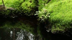 Säubern Sie Frühling des kalten Wassers Wald stock video