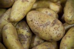 Säubern Sie grobe Kartoffel Stockbild