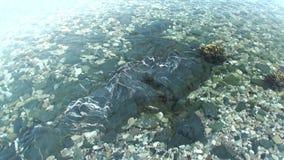 Säubern Sie klares Wasser von Kara Sea in der Wildnis der Nordpolarmeer-neuen Erde Vaigach stock footage