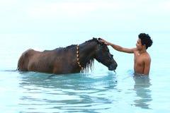 Säubern Sie Pferd Stockfotos