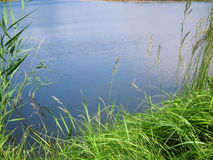 Säubern Sie Teich Lizenzfreies Stockbild