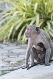 Säugetier, Affe im natürlichen Hintergrund Stockbilder