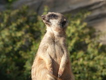 Säugetier passt auf Lizenzfreies Stockbild