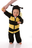 Säuglingsschätzchenbiene Lizenzfreies Stockbild