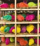 Säure farbige Hühner Stockbilder
