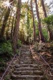 Słońce gwiazda w górnym lewym kącie z wysokimi drzewami, bardzo szorstkimi kamieni krokami i żelazo poręczami zdjęcie stock
