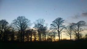 Słońce Ustawiający w natura parku obraz stock