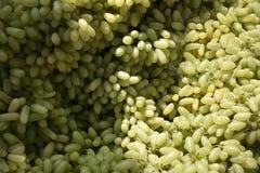 Słodki indianin zieleni winogrono, bogactwo w witaminie zdjęcie royalty free